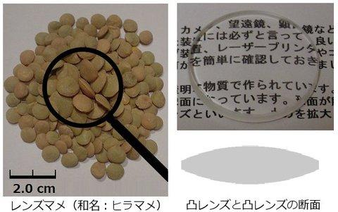 Lentil レンズ豆 レンズの語源 レンズの名前の由来