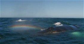 Whalerainbow