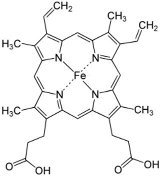 ヘモグロビンb