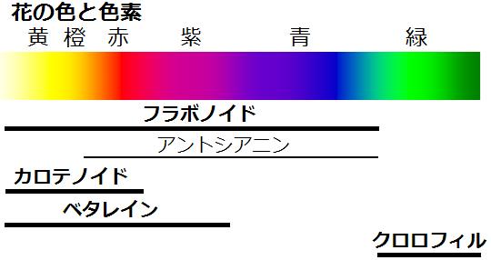 花の色と色素